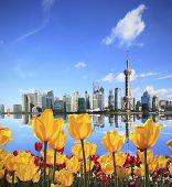 Yellow Tulips Prospect Of Shanghai The Bund's Landmark Skyline