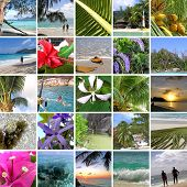 Tropical Collage