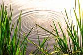 Pond ripple zen