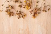 Dried Flowers St. John's Wort