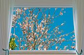 Almond Tree And Window