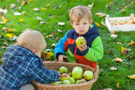 pic of crip  - Two little siblings in autumn garden with basket full of apples - JPG