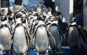 Penguin Group Walking