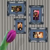 stock photo of pooch  - Pooches and pets in vintage frames at home - JPG