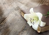 image of easter lily  - White Lily illuminated by the sun on a wooden background - JPG
