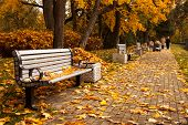 stock photo of bench  - The perspective of the row of benches in autumn park while fall with walking people in background - JPG