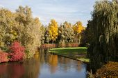 pic of weeping  - Autumn landscape with lake and weeping willow - JPG