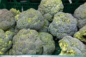 Broccoli at vegetable market.