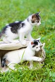 Cute little kittens, outdoors