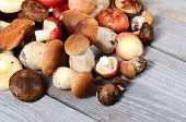 pic of boletus edulis  - The raw boletus edulis as a background - JPG