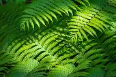 Fern Nature Background