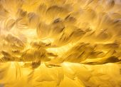 stock photo of ostrich plumage  - Orchid wing closeup - JPG