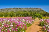 Pathway In A Flower Garden With The Mountain