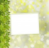 Green Branch Of  Tree And Paper Frame On Abstract Background With Bokeh Effect
