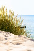 pic of dune grass  - Bright scene at the beach with dune grass - JPG