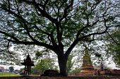 Big Tree In Buddhist Ancient Temple