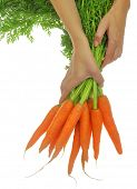 Hands holding carrots with leaves isolated on white