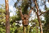 Wooden Monkey Sculpture In Dmitrov, Russia