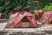 Camping With Tents In Tropical Forest