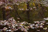 Autumn Leaves On A Pond