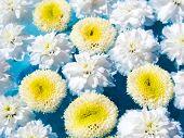 Lindas flores na água