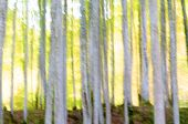 abstract beach forest scene in autumn, Irati Jungle, Pyrenees, Navarra, Spain