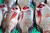 Fresh Fish - In The Market