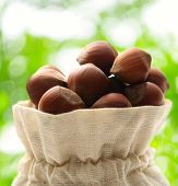 Fresh Hazelnuts In Sack