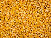 Corn Grains Background