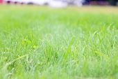 Closeup Of Green Grass With Shallow Depth Of Field On Sunny Summer Day