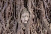 Buddha Stone Head  Statue In Tree  Of  Temple Ayutthaya In Thailand