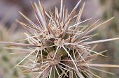 Macro of top of cactus plant