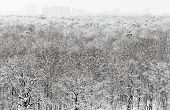 Above View Of Snowbound Forest And Urban Buildings