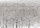 Snowbound Urban Park In Winter