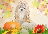 Shih tzu dog with pumpkins autumn portrait. EPS 10 format.