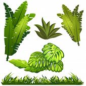 Image of  tropical leaves and grass jungle