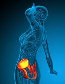 3D Render Medical Illustration Of The Hip