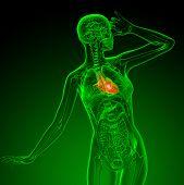 3D Render Medical Illustration Of The Heart