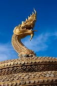 Golden Naga Snake In Thailand