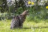 image of cute tiger  - cute tiger cat relaxes at the green grass in the sun - JPG
