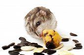 image of hamster  - hamster holding a old banana - JPG