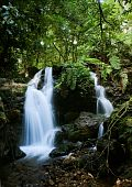 Waterfalls Of  Bwindi Forest.