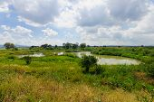 stock photo of wetland  - Wetland landscape in En Afek Nature Reserve northern Israel - JPG