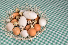 pic of chicken-wire  - Pile of eggs  - JPG