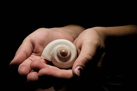 stock photo of safe haven  - Small kids hands holdnig a white snail shell on the black background hands disappearing into the dark  Concept of real estate ownership security and freedom - JPG