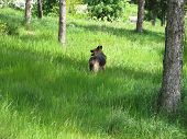 stock photo of shepherdess  - dog in the forest - JPG