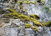 Moss Growing On A Mountain