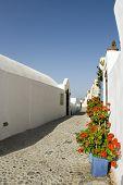 Street Scene With Flowers Greek Islands