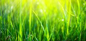 Grass. Fresh green spring grass with dew drops background, closeup. Sun. Soft Focus. Abstract Nature poster
