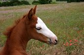 Picture of baby horse.